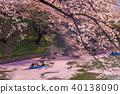 cherry blossom at chidori ga fuchi, tokyo, japan 40138090