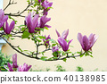 Pink magnolia flowers and green leaves 40138985