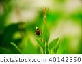 瓢虫 昆虫 自然 40142850