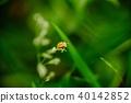 昆虫 瓢虫 自然 40142852