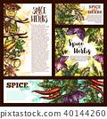 spice herb sketch 40144260