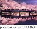 Hirosaki Park Sakura Nishijima Chunyo Bridge Reflection 40144638