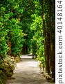 Bise Fukugi Tree 40148164