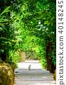 Bise Fukugi Tree 40148245