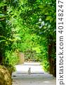 Bise Fukugi Tree 40148247