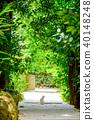 Bise Fukugi Tree 40148248