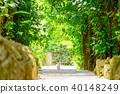 Bise Fukugi Tree 40148249