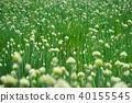 밭, 양파, 야채 40155545
