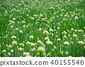 밭, 양파, 야채 40155546