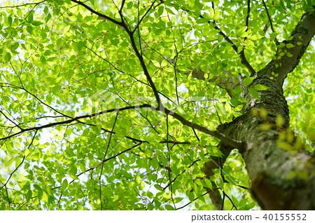 숲의 생명력 40155552