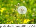 植物 植物学 植物的 40155554