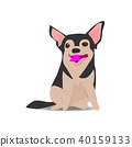 Adorable chihuahua dog on sitting pose 40159133