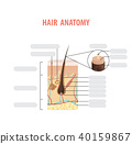 Hair anatomy blank illustration vector on white 40159867