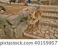 สวนนารา, นารา, กวาง, กวาง, กวาง 40159957