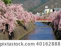 텐도 벚꽃 축제 40162888
