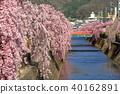 เทศกาล Tendo Sakura 40162891