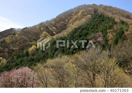 A budding broadleaf forest and an evergreen cedar forest Nasushiobara 40171303