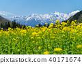 春天在白馬Aoniki區 40171674