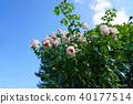 植物 植物學 植物的 40177514