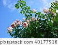 植物 植物學 植物的 40177516