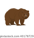 bear, grizzly, animal 40178729