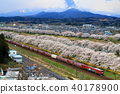 รถไฟบรรทุกสินค้าที่ไปตามแนวดอกซากุระของสายโทโฮกุและสายฮาคุชิคาว่า 40178900