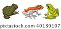 vector, animal, wild 40180107