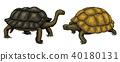 turtle, vector, animal 40180131