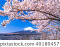"""""""山梨縣""""富士山和櫻花盛開 40180457"""