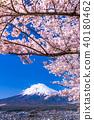 """""""山梨縣""""富士山和櫻花盛開 40180462"""