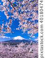"""""""山梨縣""""富士山和櫻花盛開 40180474"""