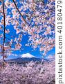富士山 櫻花 櫻 40180479