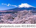 """""""山梨縣""""富士山和櫻花盛開 40180493"""