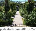 garden, gardening, the brick 40187257