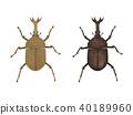 甲蟲 40189960