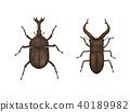 Beetle-Sawed Stag Beetle 40189982