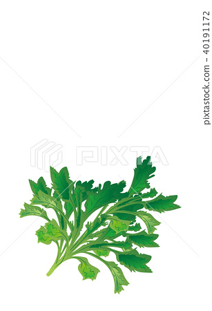 vector, vectors, vegetables 40191172
