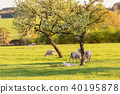 French landscape - Vosges 40195878