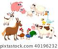 Family farm animals 40196232