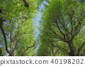 가로수, 수목, 나무 40198202