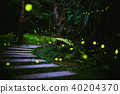 fireflies in the bush at night in taiwan 40204370