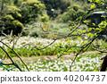 台北 景观 景色 40204737