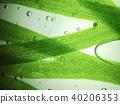 zoom microorganism algae 40206353