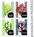Realistic Sea Weeds Posters Set 40208322