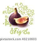 fruit exotic composition 40210603
