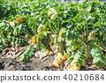 밭, 농산물, 논밭 40210684