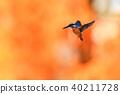 動物 鳥兒 鳥 40211728
