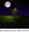 Tree on night meadow lit by moon 40211810