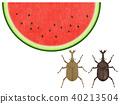 西瓜 水果 牙买加犀金龟 40213504