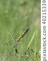 개미와 진딧물 40215339